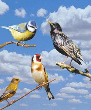 Vole vole petit oiseau 2